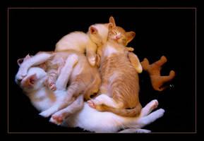 A Pile of Kitties by MiEsJ