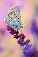 colors by MartinPrievalsky