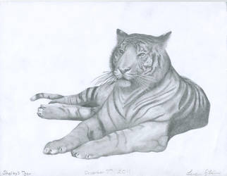 Shelby's Tiger by Cephalogirl