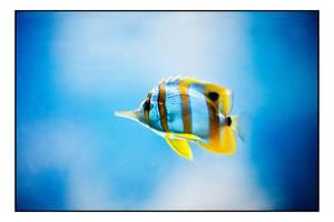 Fishy... by Uchoose