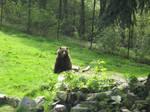 Grizzly Bear 3 by gurukitty