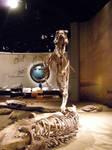 albertosaurus 4 by gurukitty