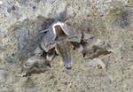 moth by gurukitty