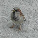 Finches 2 by gurukitty