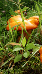 Growing up Orange by Cinnamon-ish