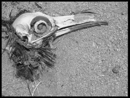 raven skull by corkpop