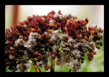 Molded flower by carma-n