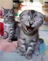 Funny Animals by Zuzuscute