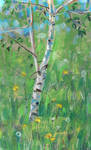 Birch by Lusidus