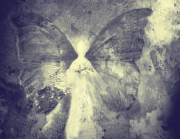 Moth by Lusidus