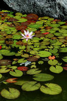 water flower by phr3akaz0id