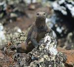 Smug Lizard by DracoFlameus