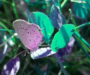 butterfly by galaxypurple