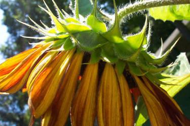 furry flower by galaxypurple