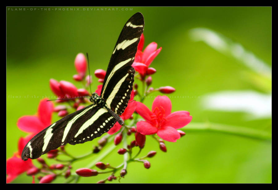 Butterfly Garden By Flame Of The Phoenix ...