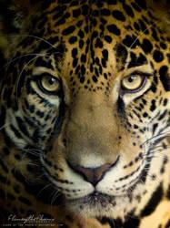 Jaguar: Eyes by Flame-of-the-Phoenix