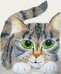 Cat Sivko by sivkolin