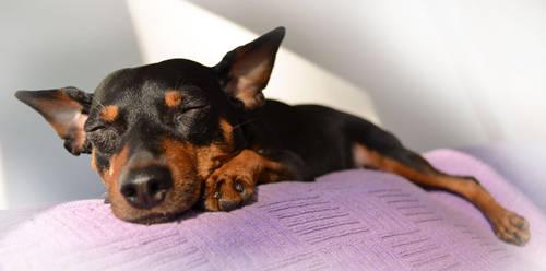 Dog's life by Ranlinde