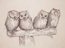 .4 Owls by iLDS