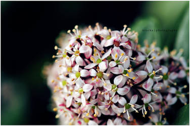 flower power by ntscha