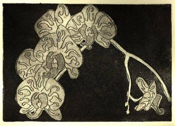 orchideous by descenxion