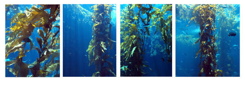 kelp forests II by descenxion