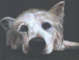 Lightly Toasted Husky by Tsyris