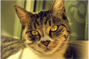 The Cat by dizzyclub