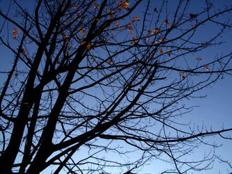 Autumn Sky I by SavageCharms