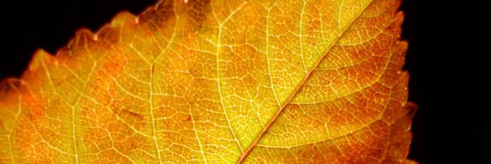 Leaf Play II by SavageCharms