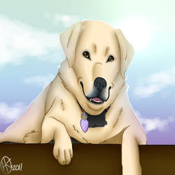 Yellow Lab by ArrowRules