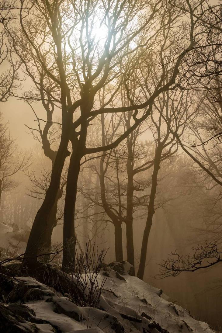 Misty forest  by giantrider8