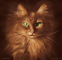 My cat by iruslan