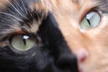 Through Her Eyes by Metzae