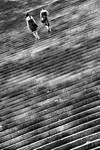 Life Roof by serhatbayram