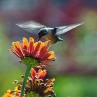 Angel wings by masscreation