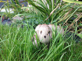 Mushroom by jomy10