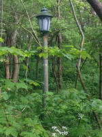 Lantern in the woods by jomy10