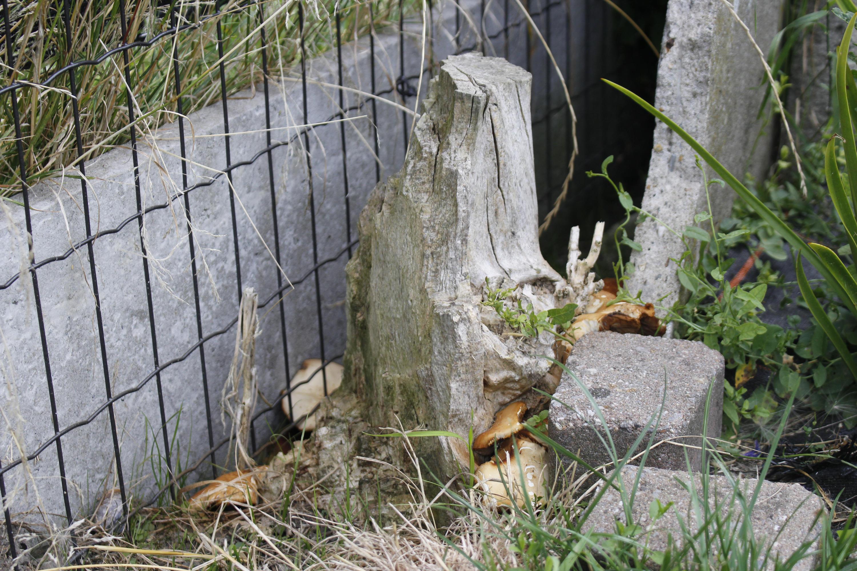 Dead Tree by jomy10