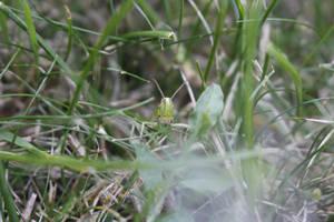 Grasshopper? by jomy10