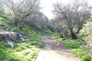 Mystic Path 2 by jomy10