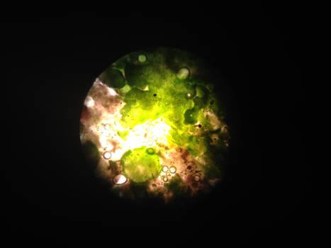 Lichen by jomy10