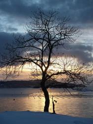 Yggdrasil by confine