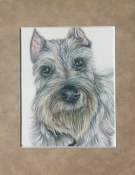 Schnauzer Commission by DrawingMaster1