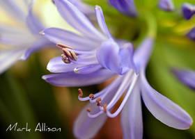Blue by Mark-Allison