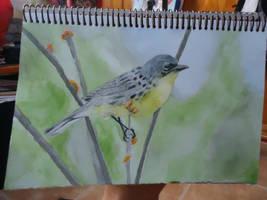 A bird. by NekanaCorp