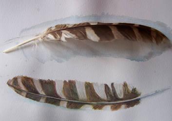 owl feather study by tamaratomorrow