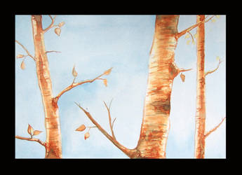 birch trees by tamaratomorrow