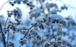 Frozen by photonFUEL
