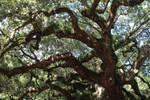 Angel Oak by xJBIRDx